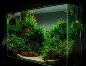 Aquarium Einrichten 60l : aquarium einrichten schritt f r schritt anleitung ~ Michelbontemps.com Haus und Dekorationen
