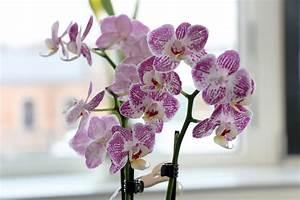 Welche Pflanzen Sind Nicht Giftig Für Katzen : sind orchideen und deren bl ten giftig f r katzen ~ Eleganceandgraceweddings.com Haus und Dekorationen