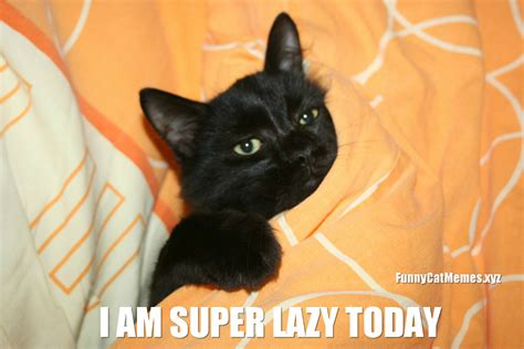 Lazy Cat Meme The Lazy Cat Cat Meme