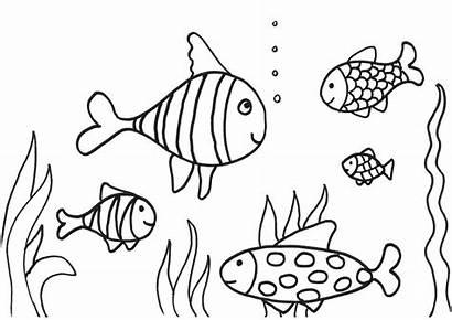 Fish Coloring Printable Children Activity Imagixs Via