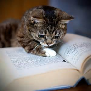 smart cat smart cats never stop learning madly cats