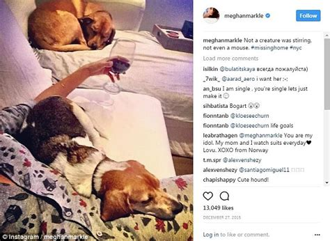close up christmas level 7 meghan markle prepares to move her beloved dogs to uk
