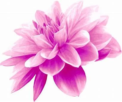 Pink Flower Clipart Flowers Clip Plant Kisscc0