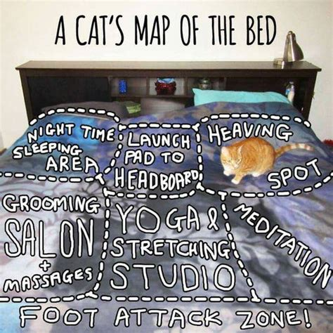 Meme Bed - a cat s map of the bed cute kitty meme funny pet humor lol humor memes com