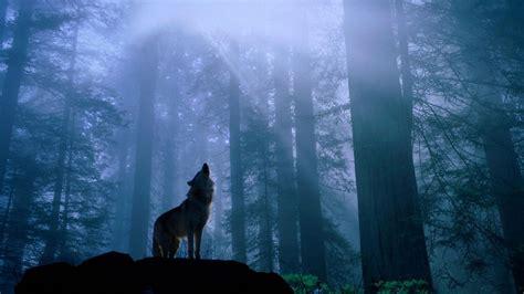 1080p Wolf Wallpaper Hd For Mobile by Wolf Wallpapers Free Pixelstalk Net