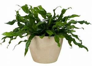 The 6 Best Indoor Plants For Brisbane Homes  U2014 Seed Landscape Design
