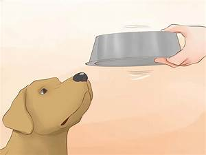 Make Your Dog Drink Water