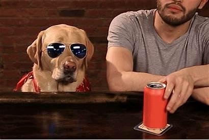 Bar Dog Giphy Gifs