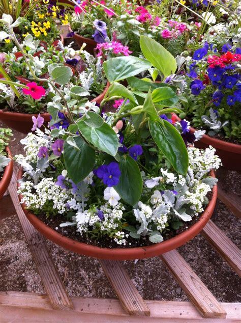 potted plant arrangements potted flower arrangement greenhouse plants pinterest
