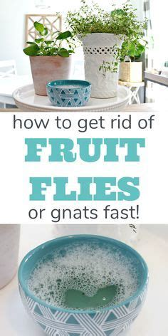rid  fruit flies fast cleaning cleaning