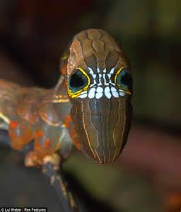 incredible skull caterpiller fighting   life