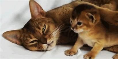Kittens Cat Kitten Kitty Giphy Animal Animated