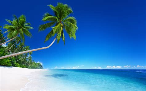 palm trees  tropical beach  ultra fond decran hd