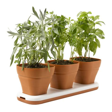 Window Sill Plant Pots by Windowsill Herb Garden Pots Adjust To Three Heights The