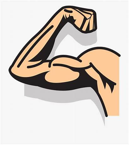 Strong Clipart Arms Muscle Arm Cliparts Clip