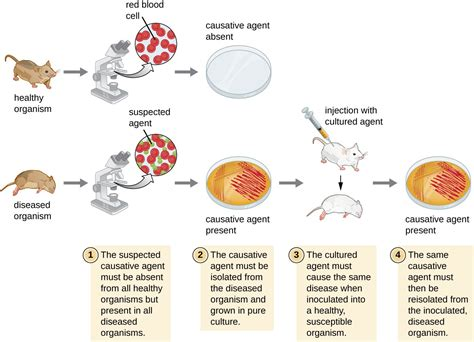 How Pathogens Cause Disease Microbiology