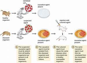 How Pathogens Cause Disease  U2013 Microbiology