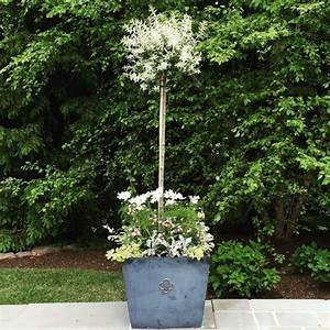 Baum Im Topf : obstb ume im topf obstsorten die man in k beln anpflanzen kann ~ A.2002-acura-tl-radio.info Haus und Dekorationen
