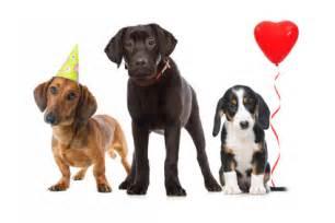 sprüche für hunde hundefreunde geburtstagsglückwünsche kostenlos für jedes altergeburtstagsglückwünsche