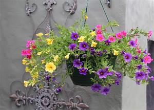 Fleur D Hiver Pour Jardinière : plante tombante cultivez votre jardin int rieur en 41 ~ Dailycaller-alerts.com Idées de Décoration