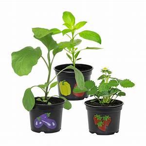 Garden Feelings Aldi : garden feelings gem sepflanzenangebot bei aldi nord ~ Watch28wear.com Haus und Dekorationen