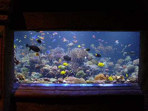 saltwater fish tank or freshwater the next type of saltwater aquarium is the coral reef