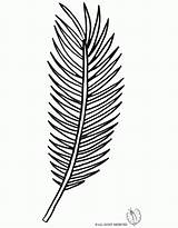 Palm Coloring Leaf Pages Tree Branch Template Drawing Line Clipart Sunday Library Templates Sketch Popular Clip Getdrawings Coloringhome sketch template