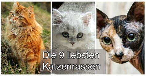 Die 9 Liebevollsten Katzenrassen