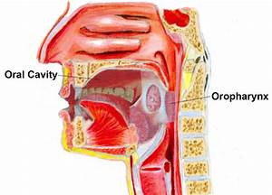 MUSC ENT E-Update: Oral Cavity and Oropharyngeal Cancer, A ...