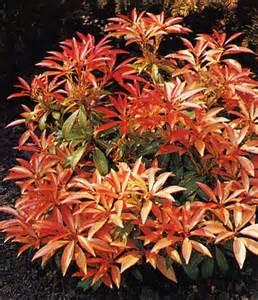 Plantes De Terre De Bruyère by Arbustes Terre De Bruy Re