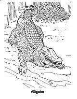 Crocodile Alligator Coloring Pages Printable Animals Preschool Crocodiles Realistic Animal Drawing Bestcoloringpagesforkids Getcoloringpages Coloringme Follow sketch template
