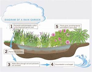 Rain Gardens Offer Solution To Storm Water Pollution