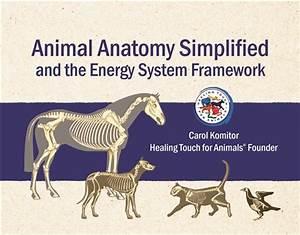 Animal Anatomy Simplified
