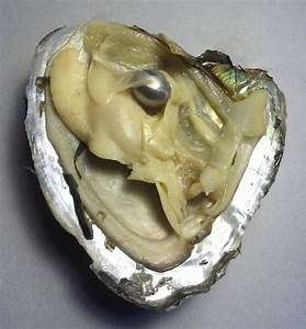 17 Best images about Difference Between Oyster Pearls And ...