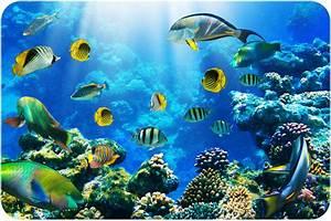 Aquatic Biomes: November 2012  Aquatic