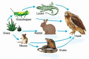 Terrestrial Food Web - Recipes Food
