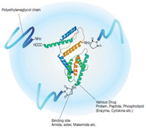 drug delivery products pegylation activated pegs