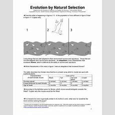 Evolution By Natural Selection 6th  9th Grade Worksheet  Lesson Planet