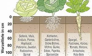Welches Gemüse Zu Welcher Jahreszeit : gem se richtig gie en ~ Whattoseeinmadrid.com Haus und Dekorationen