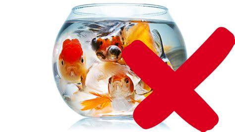 le site du poisson l aquarium pour poisson