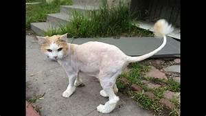 Cat Haircut Time