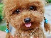 cute dogs on pinterest non shedding dogs poodles and