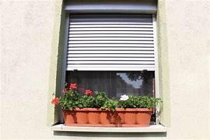 Wespen Im Haus : hornissen im rolladenkasten was tun bei einem ~ Lizthompson.info Haus und Dekorationen