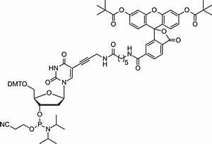 Synthesis And Properties Of Fluorescent Oligonucleotides