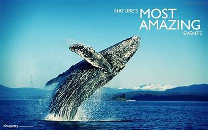Amazing Discovery Channel Wallpapers Awesome Whales Thing