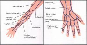 Veins For Cannulation