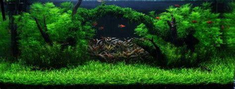 aquarium 500 liter unterwasser landschaft moosbr 252 cke f 252 r 500 liter aquarium wasserflora