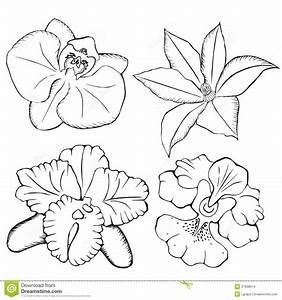 gousicteco: Orchid Drawing Black And White Images