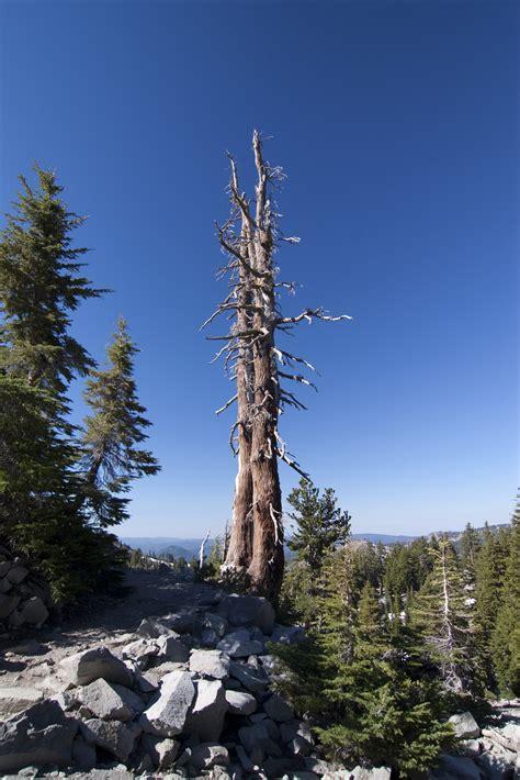 stock photo  dead tree freeimageslive