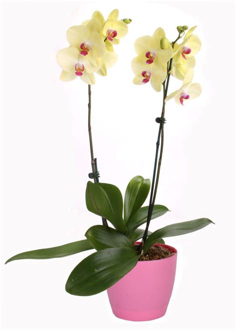 types of orchids types of orchids hgtv